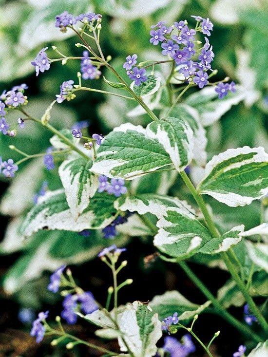Die Besten Mehrjährigen Schattenpflanzen Für Ihren Garten