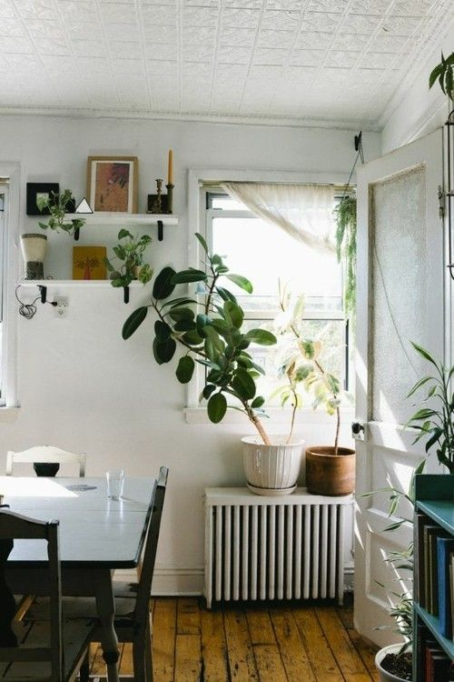 gummibaum-wohnzimmer-heizkorper-regal