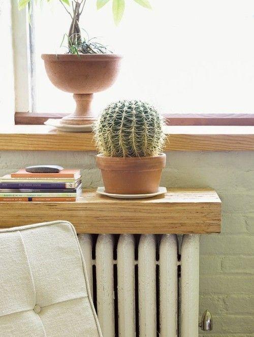 kaktus-holzbrett-fenstersims-heizkorper-regal-bucher