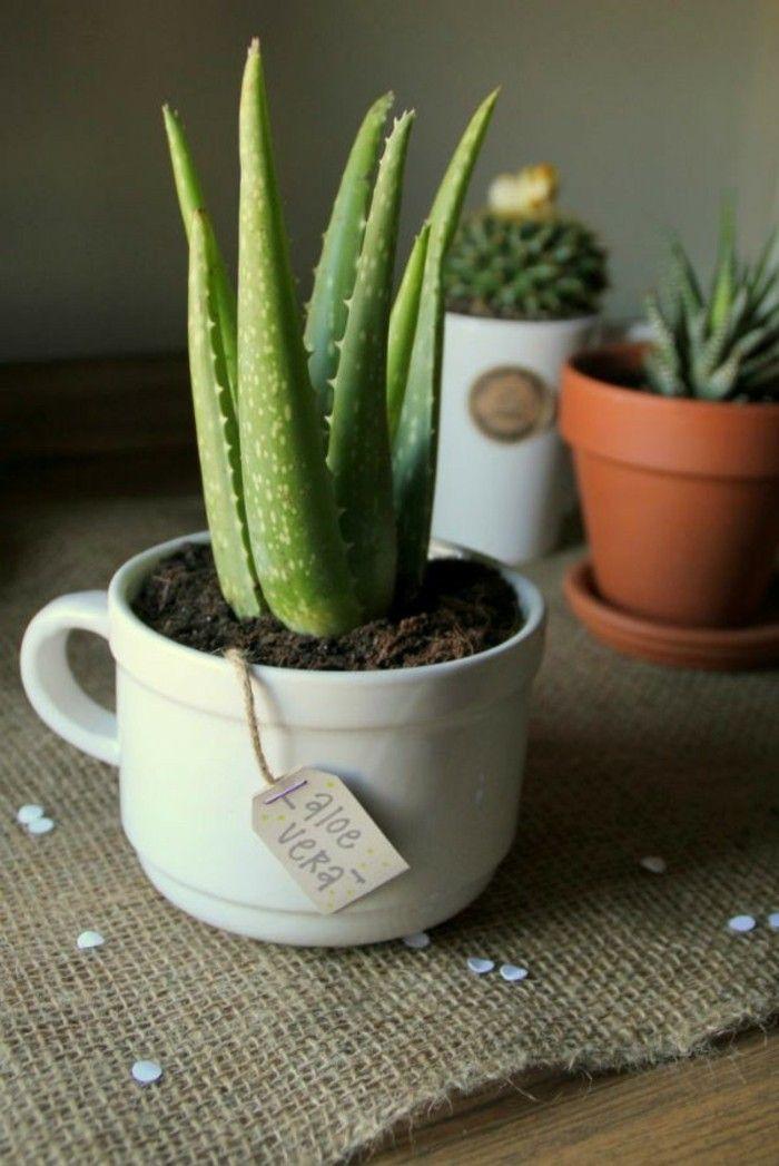 perfekte-zimmerpflanzen-aloe-vera-echte-aloe-deko-ideen