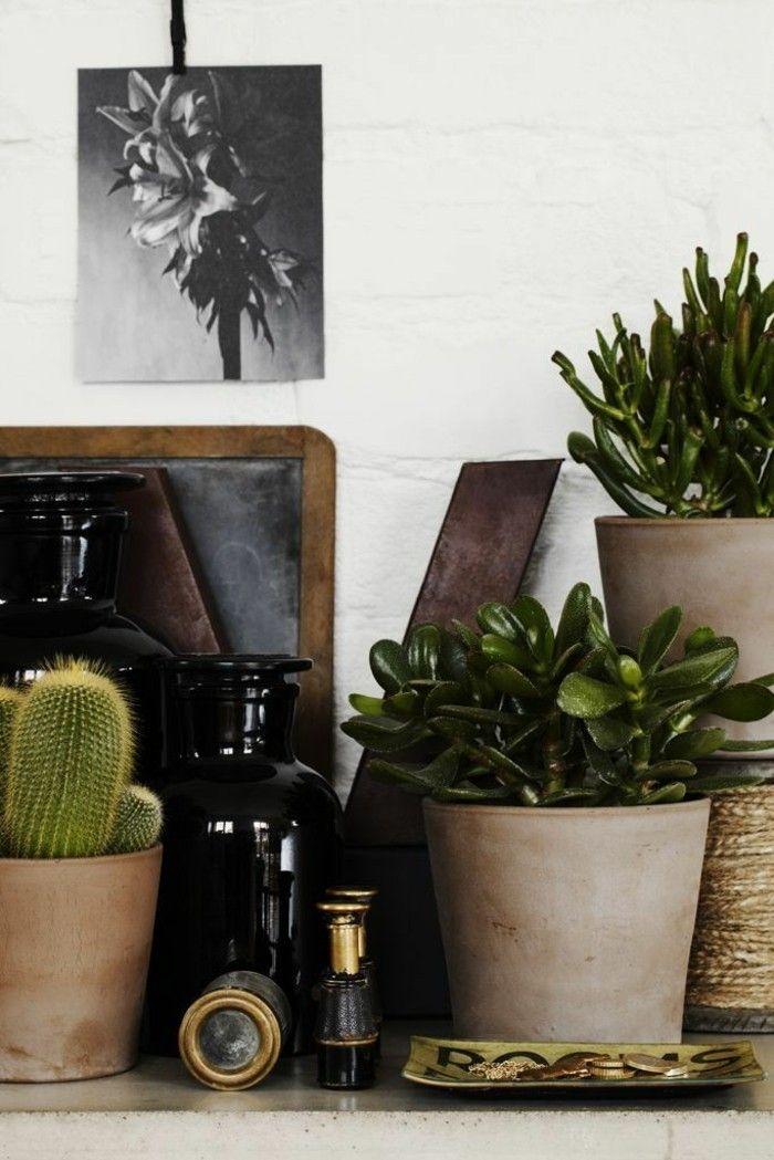perfekte-zimmerpflanzen-geldbaum-crassula-ovata-retro-office