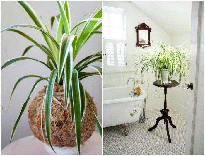perfekte-zimmerpflanzen-grunlilie-im-wasser-wohntipps