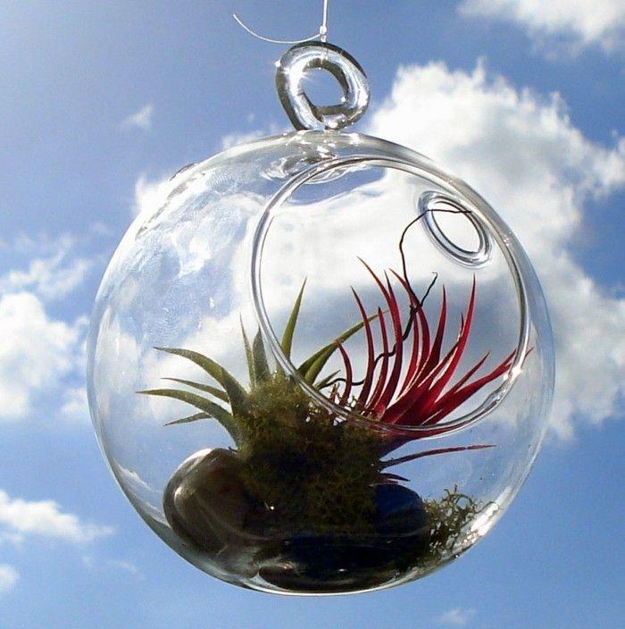 perfekte-zimmerpflanzen-luftpflanzen-glaskugel