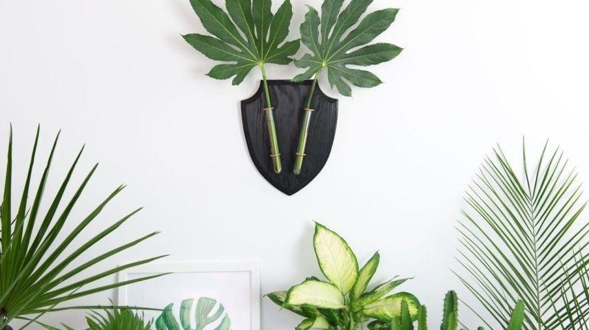 6 perfekte zimmerpflanzen f r anf nger und was muss man tun um sie nicht zu t ten. Black Bedroom Furniture Sets. Home Design Ideas