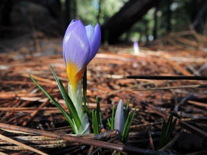 die-wildformen-von-zwiebelblumen-sind-besonders-schon