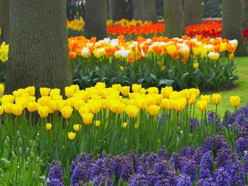 zwiebelblumen-sind-die-stars-im-fruhlingsgarten