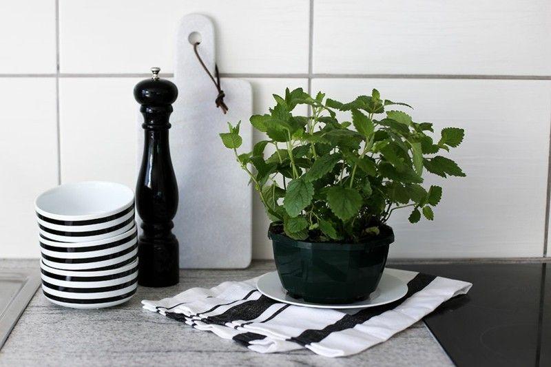 arctar.com | kräuter töpfe küche - Frische Kräuter In Der Küche
