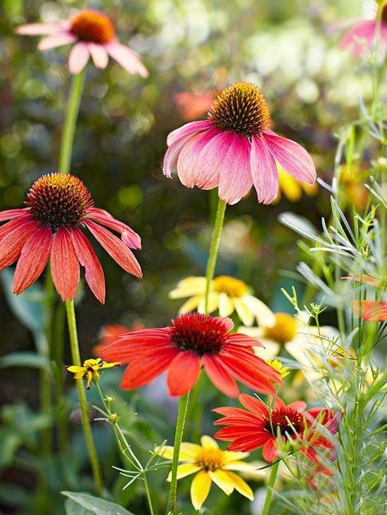 puschkinie-gartenblumen