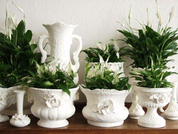 spathiphyllum-2-zimmerpflanzen