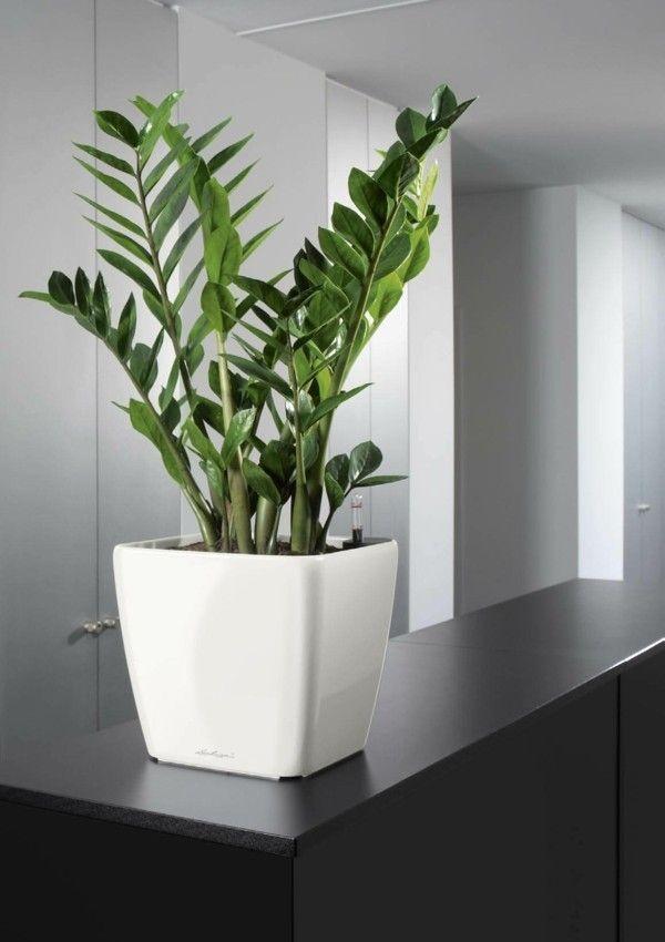 5 pflegeleichte zimmerpflanzen f r anf nger. Black Bedroom Furniture Sets. Home Design Ideas