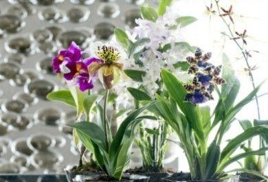 edle orchideen die besten zimmerpflanzen des monats. Black Bedroom Furniture Sets. Home Design Ideas