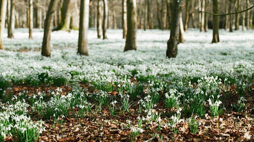 winterharte Gartenblumen,