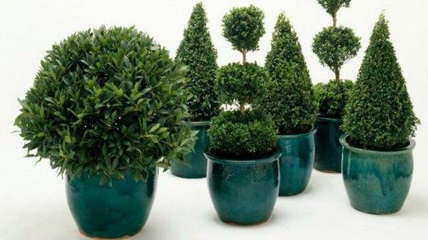 buchsbaumpflanzen-topfen-formen-schenken