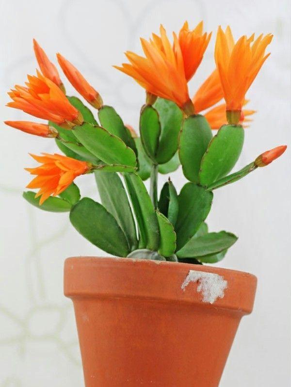 elegante-bluten-orange-natur-pur
