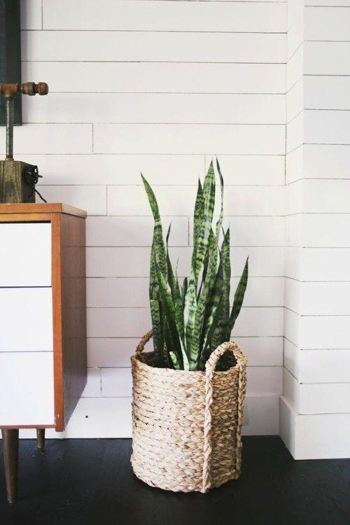 sch ne badpflanzen verwandeln das badezimmer in eine wohlf hloase. Black Bedroom Furniture Sets. Home Design Ideas