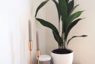 Bad Pflanzen schöne badpflanzen verwandeln das badezimmer in eine wohlfühloase