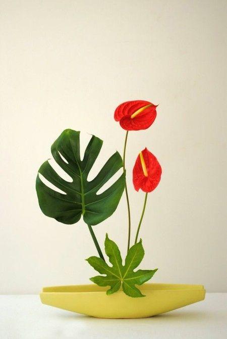 Anthurium ein wahres Symbol der Liebe