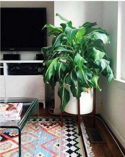 sch ne zimmerpflanzen die wenig licht brauchen. Black Bedroom Furniture Sets. Home Design Ideas