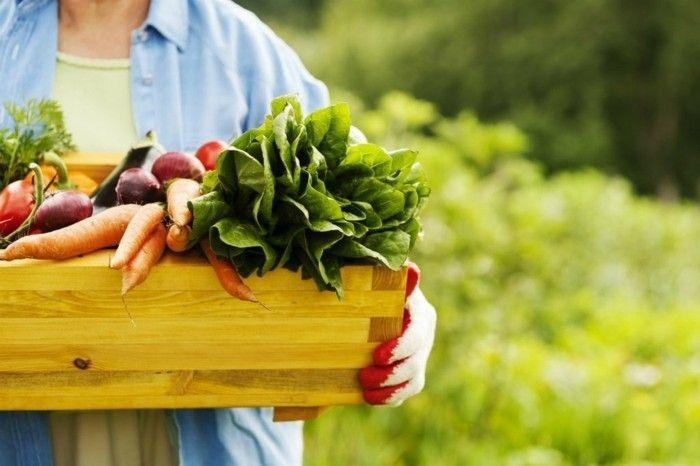 Frisches Obst Gemüse Samen gesunde Rezepte lieber kein Fleisch - Vegetarier