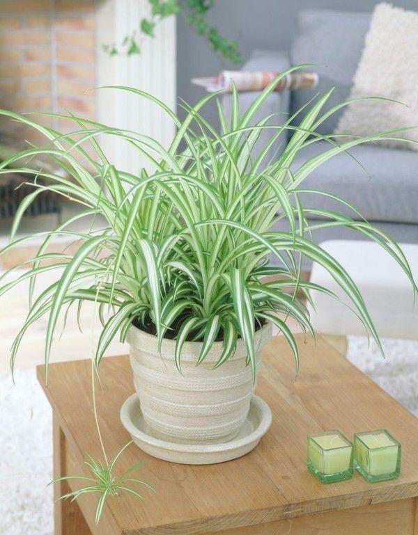 zimmerpflanzen die mit wenig licht gut auskommen. Black Bedroom Furniture Sets. Home Design Ideas