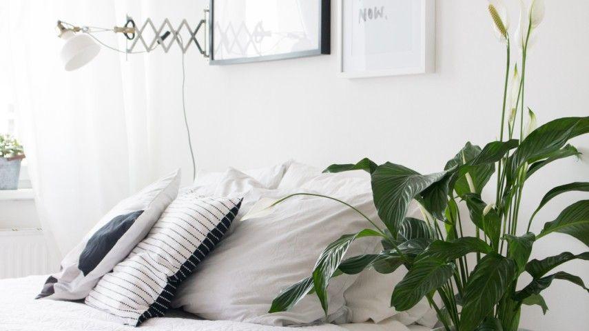 Die Winterschonheiten Sind Da Herrliche Zimmerpflanzen Die Im