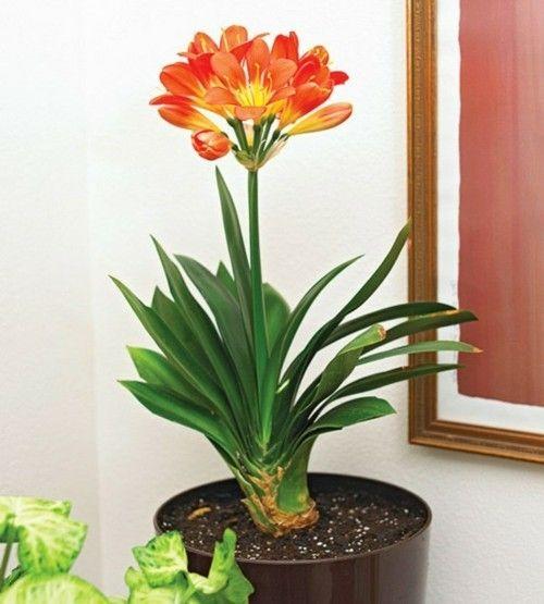 die wintersch nheiten sind da herrliche zimmerpflanzen die im winter bl hen. Black Bedroom Furniture Sets. Home Design Ideas