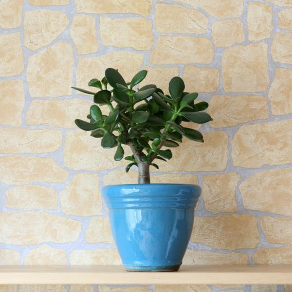 pflanzen-wie-die-jadepflanze-sind-in-dieser-ecke-gut-angebracht
