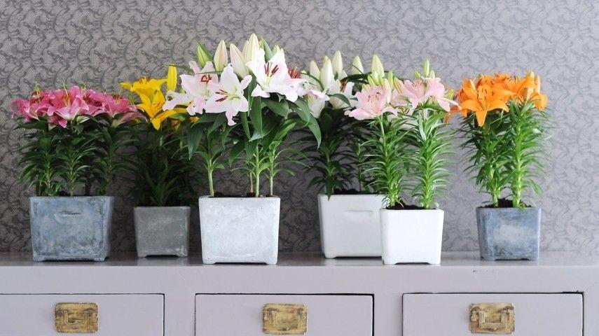 Schöne Zimmerpflanzen Die Wenig Licht Brauchen Trendomatcom