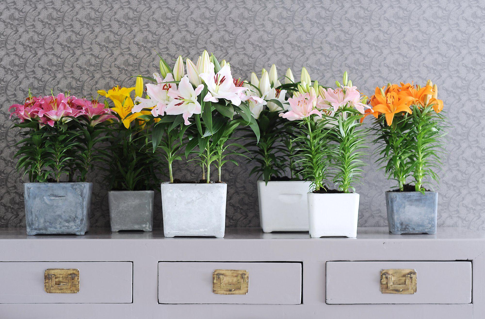 Coole Zimmerpflanzen coole zimmerpflanzen hausdesignweb co
