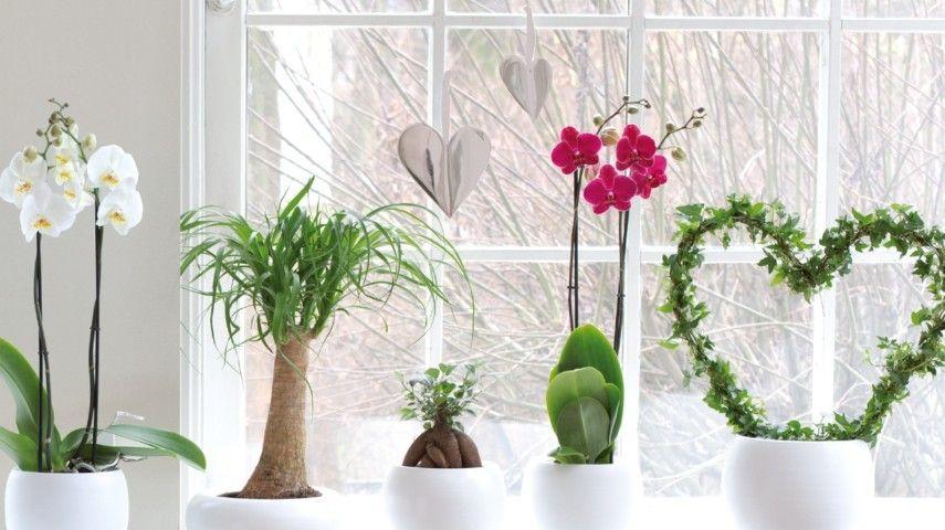 Glücksbringer unter den Zimmerpflanzen - welche sind diese ...