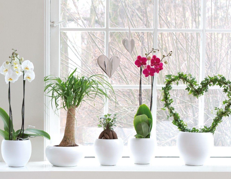 gl cksbringer unter den zimmerpflanzen welche sind diese blumen. Black Bedroom Furniture Sets. Home Design Ideas