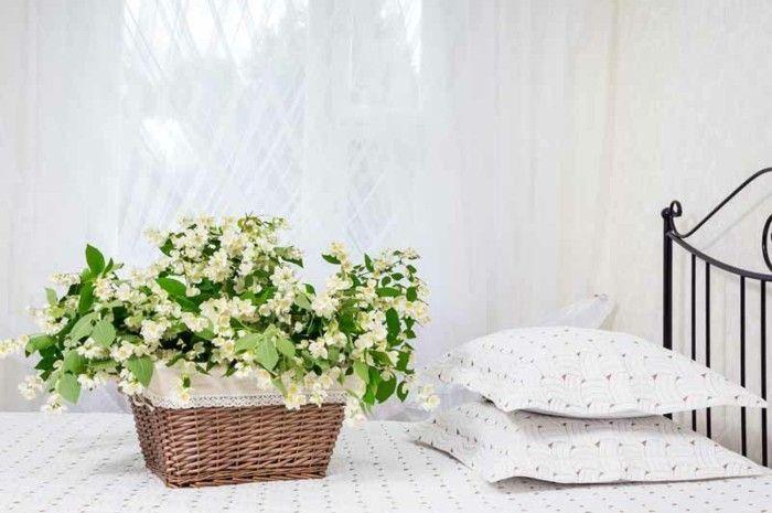 jasmin pflanze zarte bl tenpracht bet render duft und heilende eigenschaften in einem. Black Bedroom Furniture Sets. Home Design Ideas